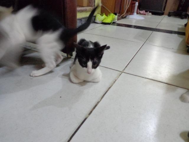 Doação Gato filhotes saudáveis - Foto 4