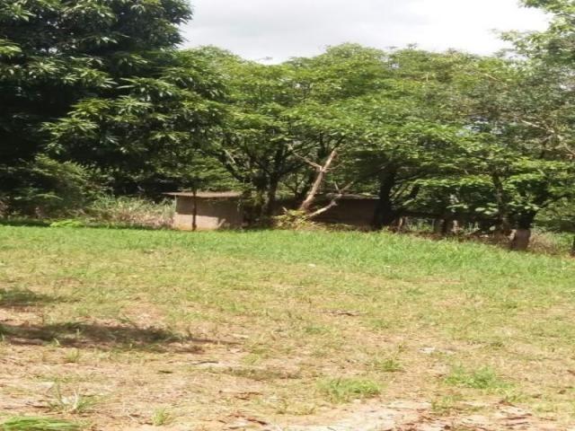 Chácara à venda com 3 dormitórios em Zona rural, Cezarina cod:em527 - Foto 4