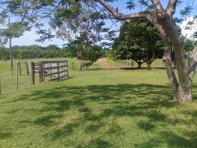 Fazenda toda formada a 99 km de Várzea Grande sentido Cáceres - Foto 12