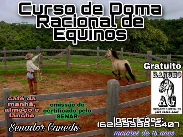 Cavalo/Éguas chucros para curso de Doma
