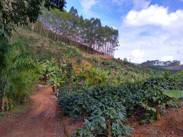 DM- Sítio grande e produtivo em Santa Teresa 25 Hectares - Foto 14