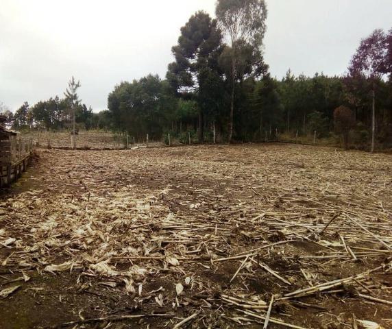 Sítio na Vila Rural (Queimadas) em Inácio Martins - Área: 5,044.09 m² - Foto 2