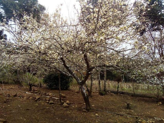 Sítio na Vila Rural (Queimadas) em Inácio Martins - Área: 5,044.09 m² - Foto 19