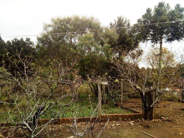 Sítio na Vila Rural (Queimadas) em Inácio Martins - Área: 5,044.09 m² - Foto 18