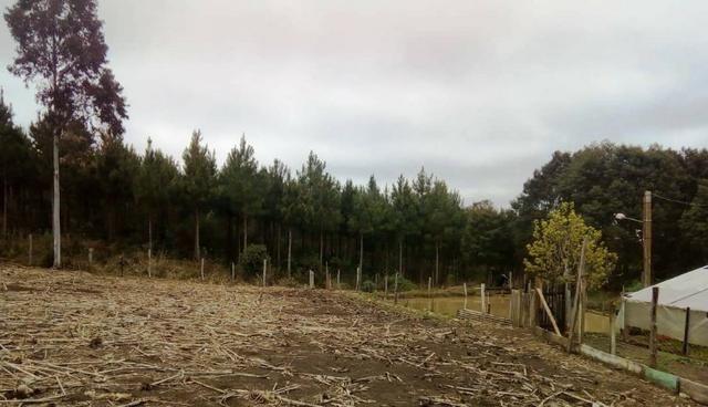 Sítio na Vila Rural (Queimadas) em Inácio Martins - Área: 5,044.09 m² - Foto 3