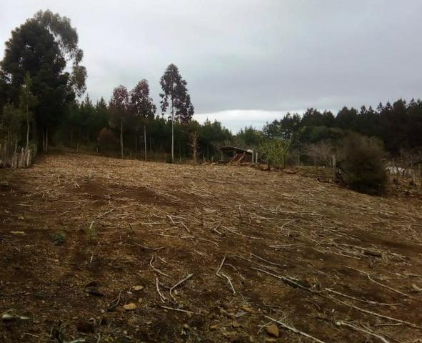 Sítio na Vila Rural (Queimadas) em Inácio Martins - Área: 5,044.09 m² - Foto 16