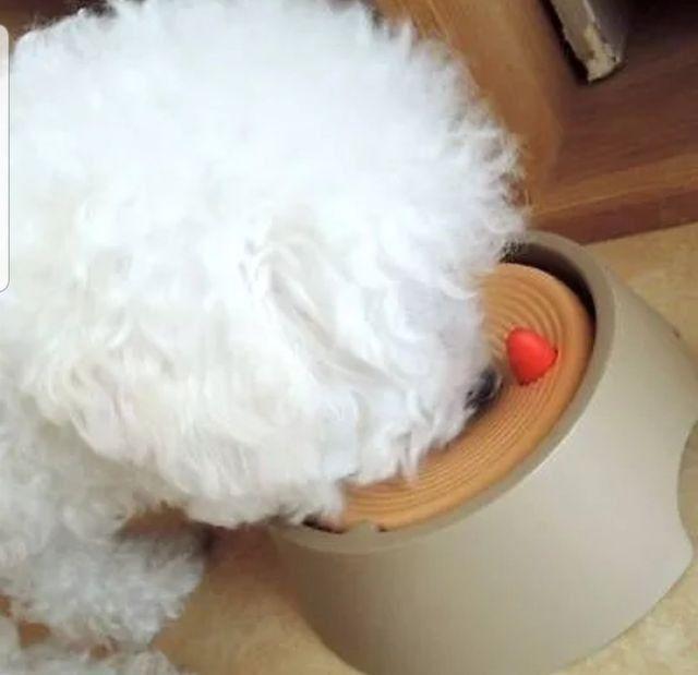 Bebedouro inteligente pet - Foto 6