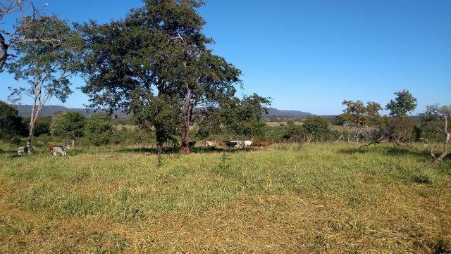 """Ótimo sítio 35 ha"" - Sidrolândia MS, Brasil - Foto 4"