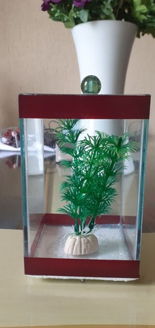 aquário pequeno