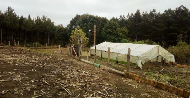 Sítio na Vila Rural (Queimadas) em Inácio Martins - Área: 5,044.09 m² - Foto 10