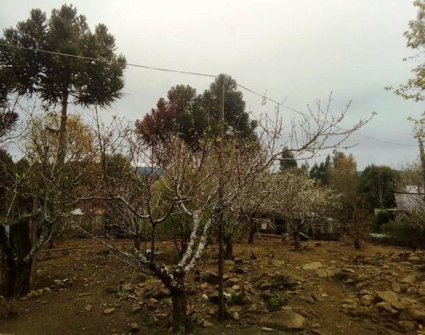 Sítio na Vila Rural (Queimadas) em Inácio Martins - Área: 5,044.09 m² - Foto 4