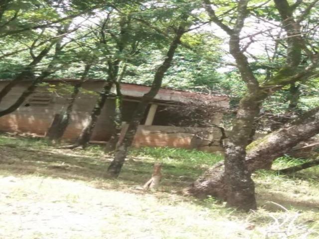 Chácara à venda com 3 dormitórios em Zona rural, Cezarina cod:em527 - Foto 9