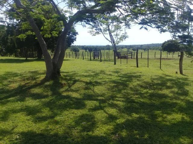 Fazenda toda formada a 99 km de Várzea Grande sentido Cáceres - Foto 11