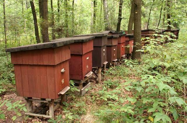 Itens para apicultura - Foto 3