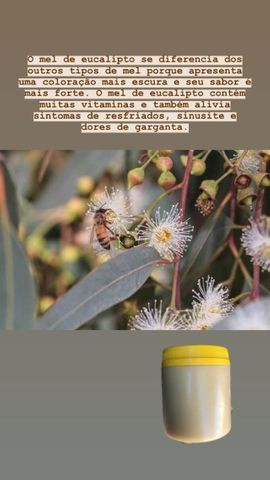 Mel de Abelha Puro- Eucalipto - Direto do produtor - Potes de 1KG - Foto 5