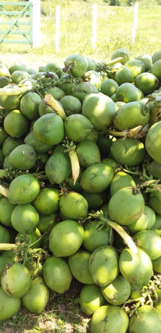 Coco Verde R$ 0,90