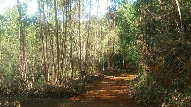 DM- Sítio/Terreno Grande em Santa Teresa 13 hectares - Foto 18