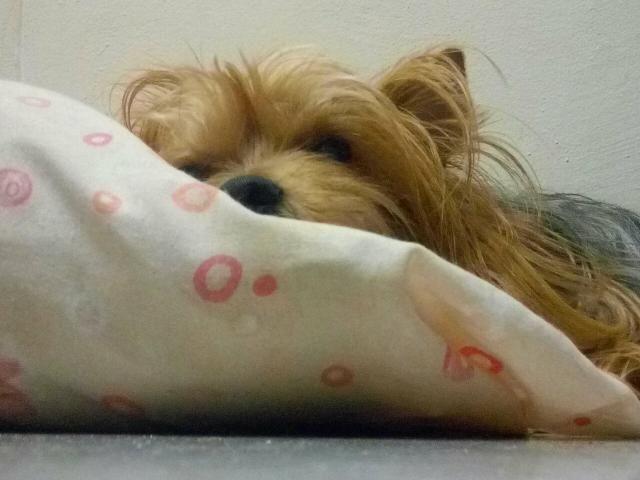 Hotelzinho para seu cãozinho