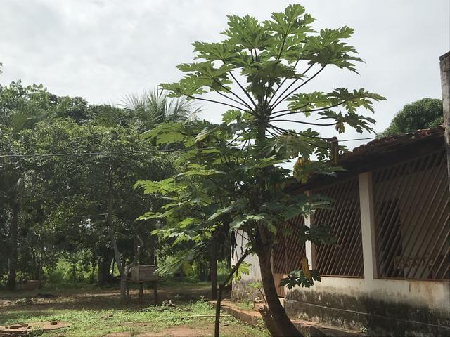 Vendo fazenda em Tocantinópolis 34 alqueires