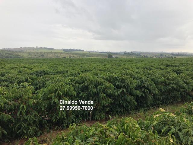 Fazenda com 35 alqueires (169,40 hectares) em São Mateus ES - Foto 5