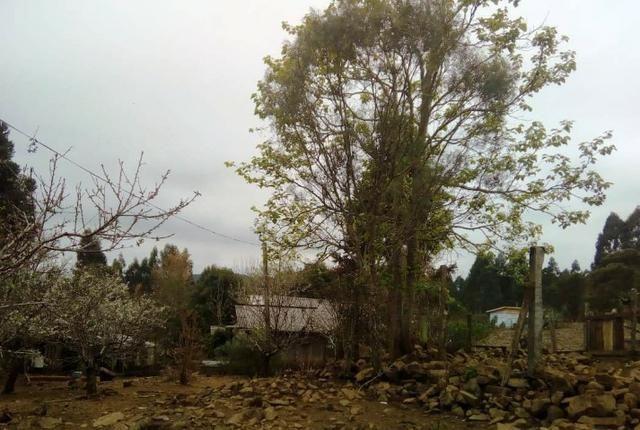 Sítio na Vila Rural (Queimadas) em Inácio Martins - Área: 5,044.09 m² - Foto 5