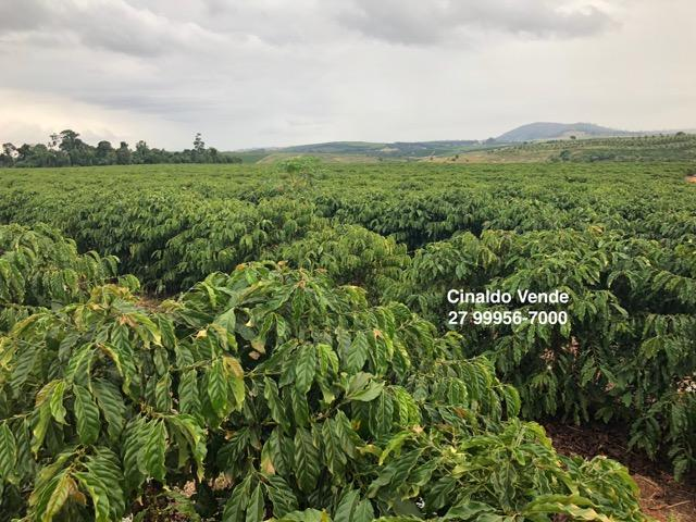 Fazenda com 35 alqueires (169,40 hectares) em São Mateus ES - Foto 3