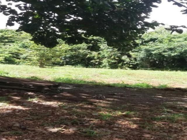 Chácara à venda com 3 dormitórios em Zona rural, Cezarina cod:em527 - Foto 2