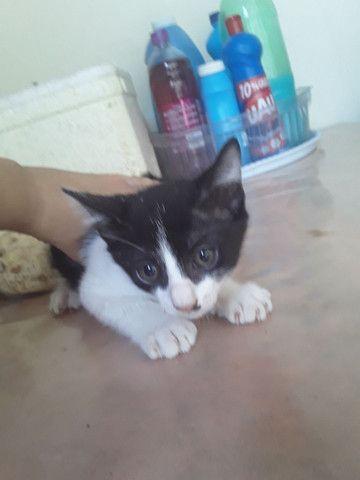 Estou doando esses gatos são lindos e muito sabidos comem tudo .. - Foto 4