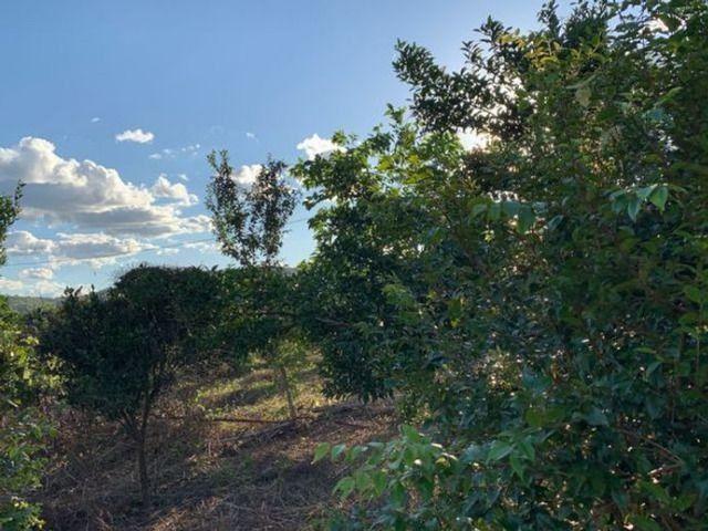 Vendo Fazenda 12 Alqueires, 55 Km de Palmas - Foto 8
