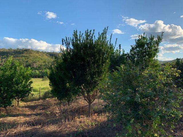 Vendo Fazenda 12 Alqueires, 55 Km de Palmas - Foto 9