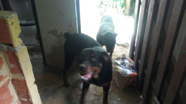 Cachorros  - Foto 2
