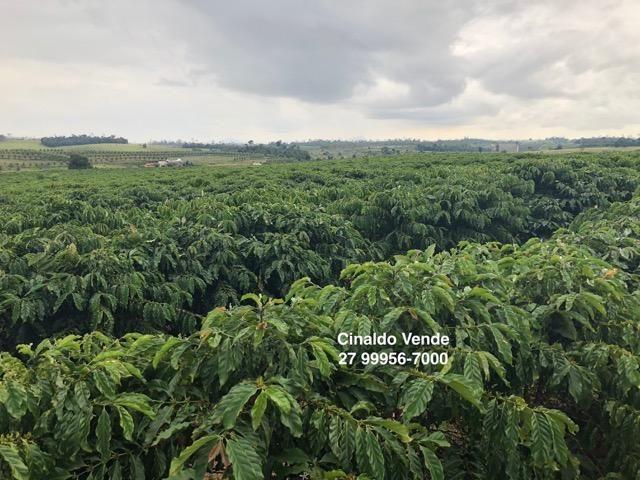 Fazenda com 35 alqueires (169,40 hectares) em São Mateus ES - Foto 4