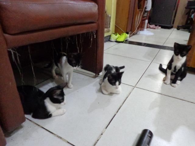 Doação Gato filhotes saudáveis - Foto 6