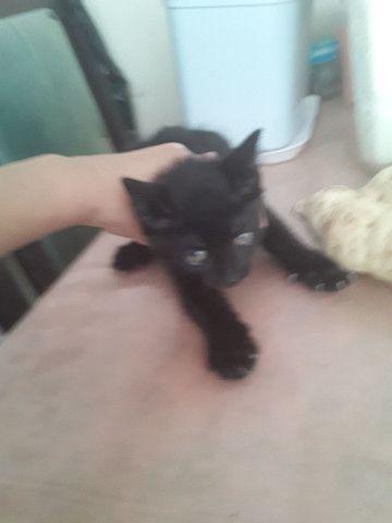 Estou doando esses gatos são lindos e muito sabidos comem tudo .. - Foto 2