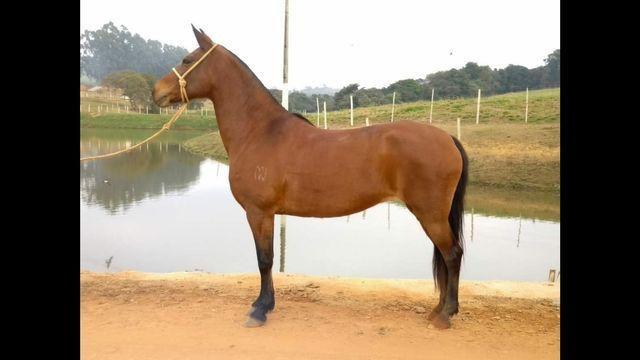 Égua MM registrada. - Foto 3
