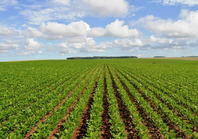 Invista no campo crédito rural para plantio, reforma de pasto em geral.