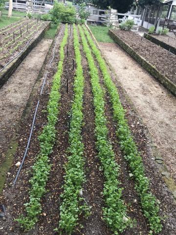 Fazenda real 3 - Foto 5