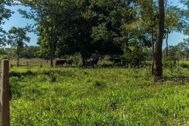 Chácara 8,32 hectares - Foto 13