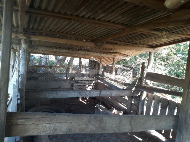 Chácara com caneiros, aves, tanque com peixes na BR 364 - Foto 4