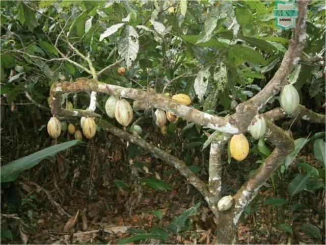 Fazenda na cidade de Ibirataia a 340 Km de Salvador e 320 Km de Camaçari - Foto 18