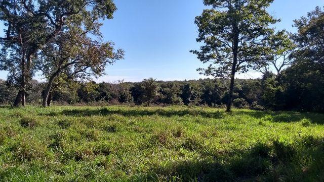 """Ótimo sítio 35 ha"" - Sidrolândia MS, Brasil - Foto 18"