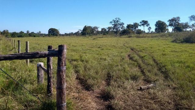 """Ótimo sítio 35 ha"" - Sidrolândia MS, Brasil - Foto 11"