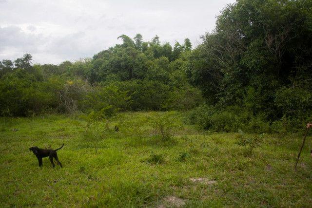 Área Rural de 42.209m² - Foto 7