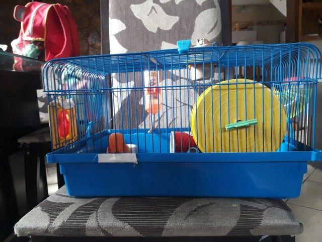 Vendo kit para hamster - Foto 3
