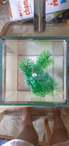 aquário pequeno - Foto 2