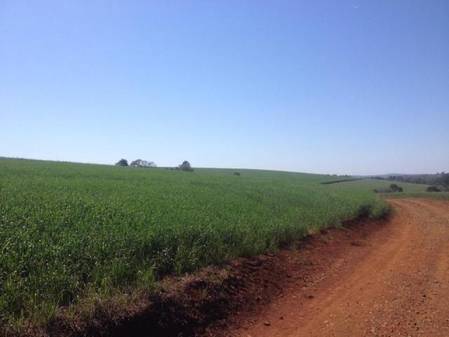8271   Fazenda à venda em ZONA RURAL, Espigão Alto Do Iguaçu - Foto 2