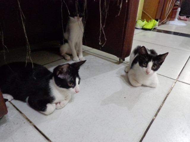 Doação Gato filhotes saudáveis - Foto 5
