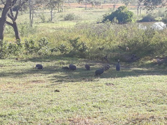 Chácara com caneiros, aves, tanque com peixes na BR 364 - Foto 8