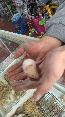 Vendo um hamster