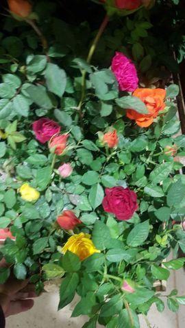 Plantas  - Foto 2